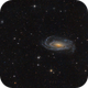 NGC 5033 from Texas,                                Ron Crouch