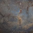 IC1396 SHO,                                Steve MacDonald
