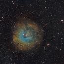 Sh2-170 - The Small Rosette Nebula in SHO,                                Piet Vanneste