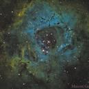 NGC 2244 Caldwell 49 Rosette,                                Maicon Germiniani