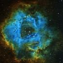 Rosette Nebula,                                Trevor Nicholls