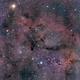 Elephant's Trunk - IC 1396,                                David Augros