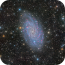 Trianglum Galaxy (Messier 33),                                Miles Zhou