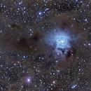 NGC 7023 Iris Nebula,                                Greg Nelson