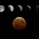 Lunar Eclipse 2010,                                cclark