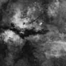 IC 1318 Butterfly Nebula,                                Yizhou Zhang
