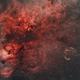 Cygnus at 50mm,                                Jeffrey Horne