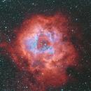 NGC2244-Rosettennebel,                                Alexander Vogt