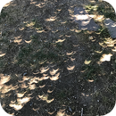 Solar Eclipse through the Leaves,                                Jon Bearscove