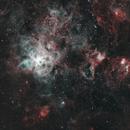 Tarantula Nebula NGC2070,                                Chris Vaughan