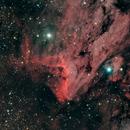 IC 5070 Pelican Nebula #3,                                Molly Wakeling