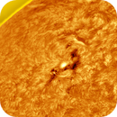 AR12833 of today in H-alpha frequency. Inverted, false colors.,                                Gabriel - Uranus7