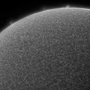 Solar Prominences & Active Region, HA, B&W, July 31 2018,                                Martin (Marty) Wise
