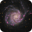 M101 Close up with lots of H-Alpha,                                Julian Shroff