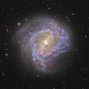 M83  Southern Pinwheel Galaxy,                                Chris Dowd