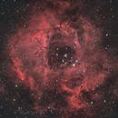 NGC 2244 - Rosette Nebula,                                DanielZoliro