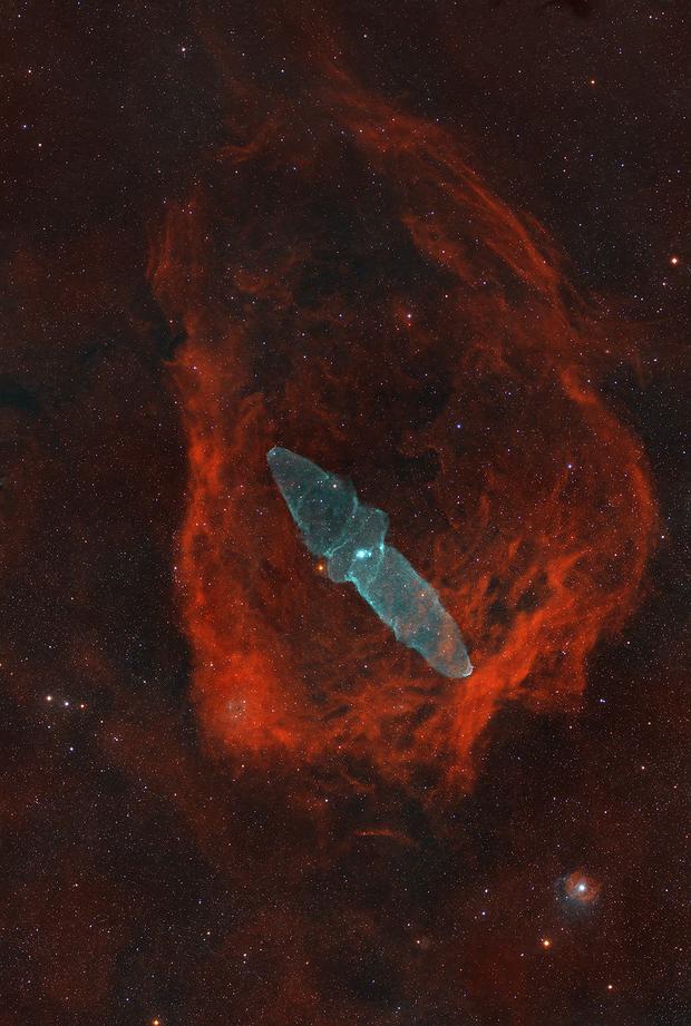 The Squid and the Flying Bat Nebula,                                Sinan Arkin