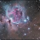M42,                                Sushiraptor
