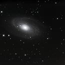 M81,                                Vinceniello