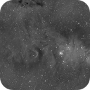 NGC 2264,                                Ethan Wong