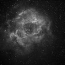 NGC2237 Rosetta,                                Lorenzo Daccordo