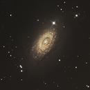 M63 - Sunflower galaxy,                                Bill Beers