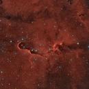 The Elephant's Trunk Nebula,                                Frederick Steiling