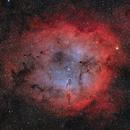 IC1396,                                Maciej Zakrzewski