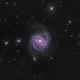 Messier 100,                                Mike Miller