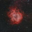 Rosette Nebula,                                Paul Ng
