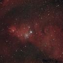 NGC 2264 - Cone nebula,                                Tom914