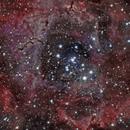 Rosette Nebula,                                Tim