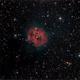 IC 5146 (the Cocoon Nebula),                                Randal Healey