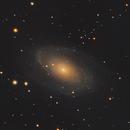 M81/M82,                                Chad Andrist