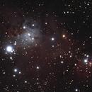 NGC 2264 : la nébuleuse du Cône,                                Philastro