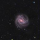 Messier 83 Southern pinwheel Galaxy,                                Martin Williams