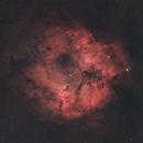 The Elephant's Trunk Nebula,                                PauRoche