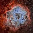 Rosette Nebula (Caldwell 49),                                Sinan Arkin