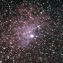 Flaming Star Nebula,                                ckrege