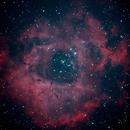 Rosette Nebula bicolor ,                                Rudolf Bumm