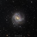 M83 - The Southern Pinwheel Galaxy,                                Graham Conaty
