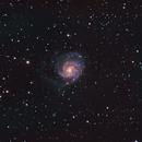 M101 LRGB,                                Pam Whitfield