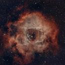 Rosette Nebula  NGC2237,                                Ray Heinle