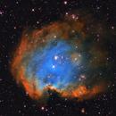 Monkey Head Nebula (NGC2174),                                Andrea Ferri