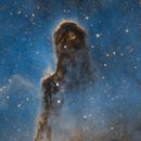 Trunk Nebula SHO,                                Denis Salnikov