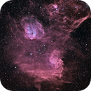 flaming star bicolor,                                pfile