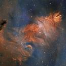 NGC 2264 Cone, Fox Fur and Christmas Tree SHO,                                Randy Lindstrom