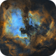North America and Pelican Nebulas,                                Sinan Arkin