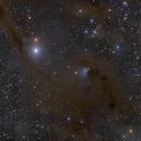 LDN 1495, LBN 782 and surroundings (B7, B10, B209, B211, B213, VdB 27),                                Maurice Toet