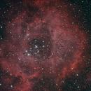 Rosette (IDAS P2 Filter),                                Robin Clark - EAA imager